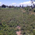 Land on Busia Road, Kisian Junction
