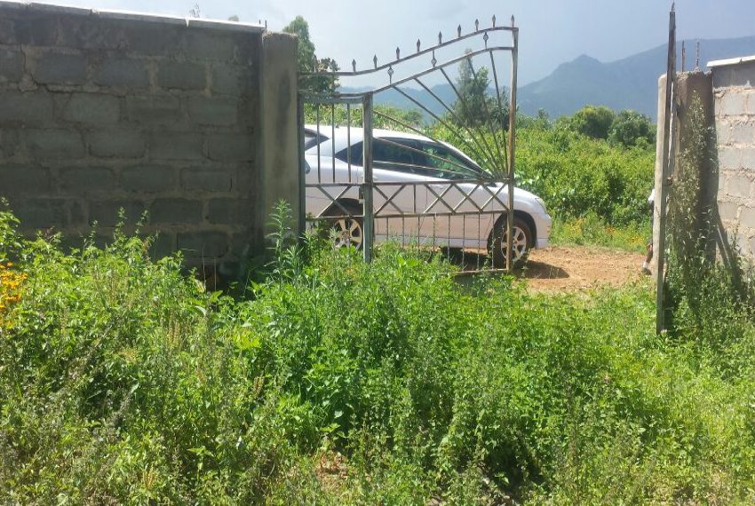 Plot in Mamboleo